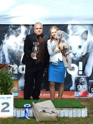 National Dog Show in Elva 2016
